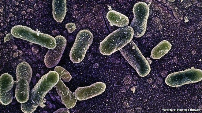 » FTD Bacterial gastroenteritis